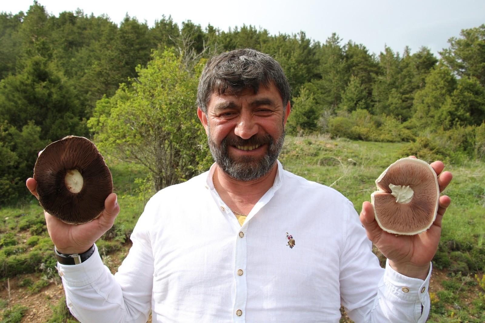 Erzurum'da Kasa kasa mantar topladılar
