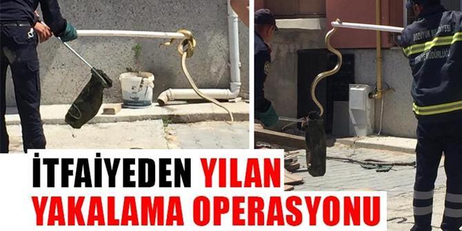 Erzurum'da Bir mahallenin yılan seferberliği