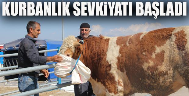 Doğu Anadolu'dan kurbanlık sevkiyatları başlıyor