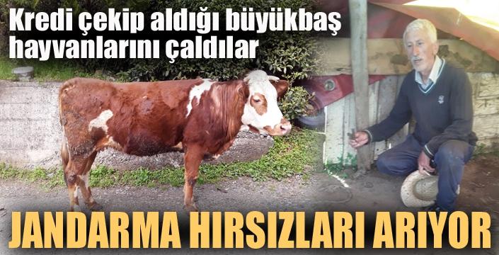 Erzurum'da Jandarma hayvan hırsızlarını arıyor