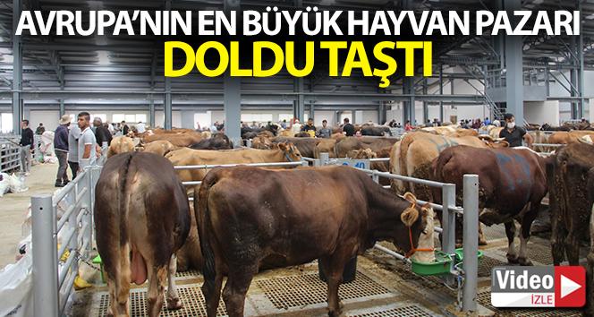 Avrupa'nın en büyük canlı hayvan pazarı doldu taştı