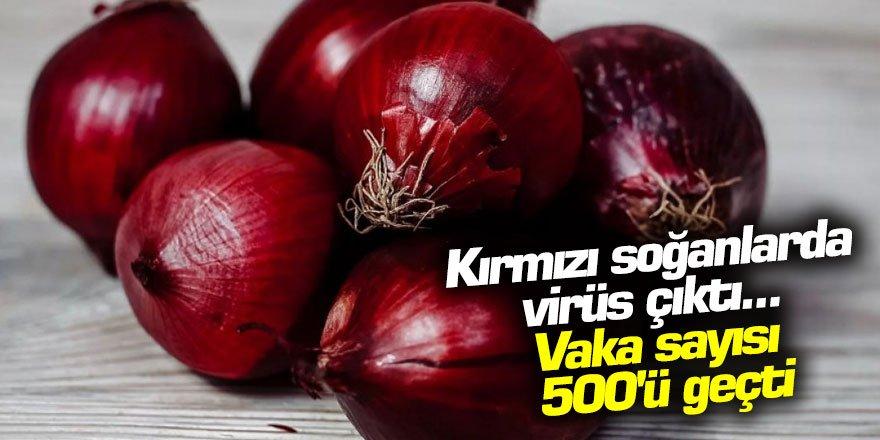 Kırmızı soğanlarda virüs çıktı... Vaka sayısı 500'ü geçti
