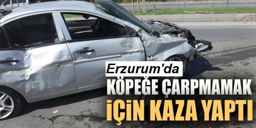 Erzurum'da köpek faciaya neden oluyordu