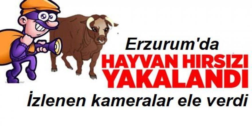 Erzurum'da hayvan hırsızı kameraya yakalandı