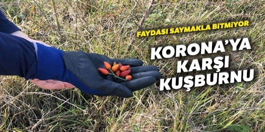 Korona'ya karşı birebir! Dağlarda yetişiyor, faydası saymakla bitmiyor