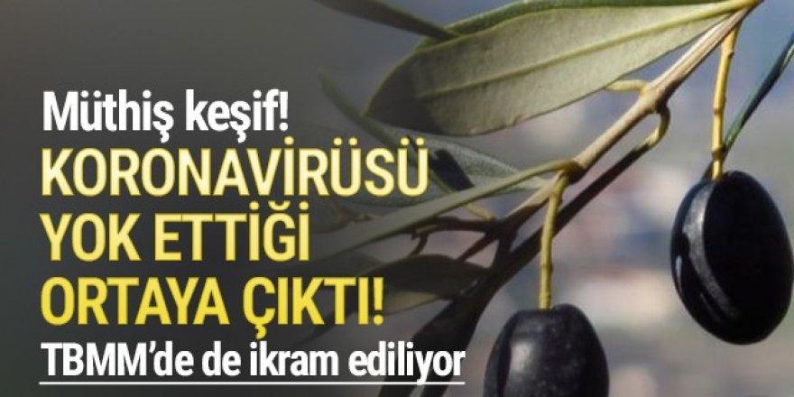 Zeytin yaprağının koronavirüsü yok ettiği ortaya çıktı