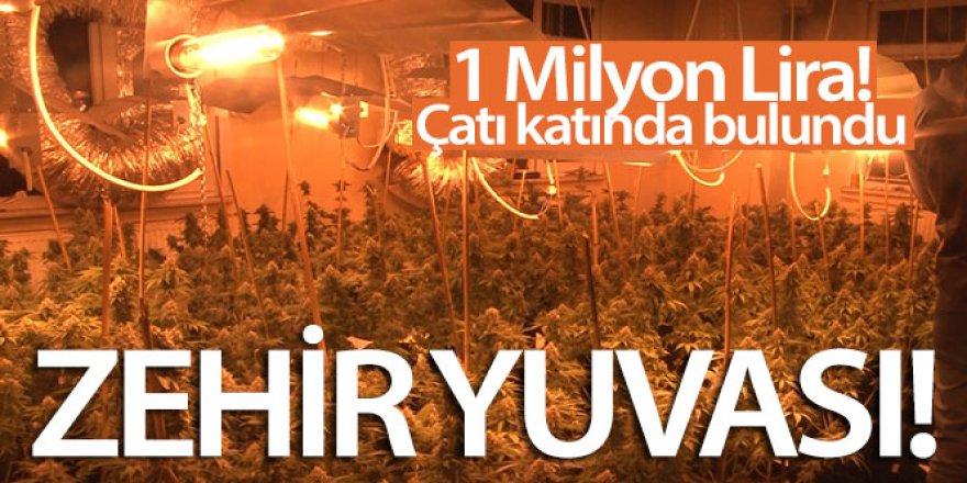 1 Milyon Liralık uyuşturucu serası bulundu