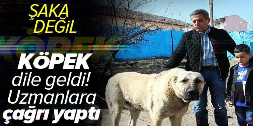 Erzurum'da köpek dile geldi: Benim adım Ejder.