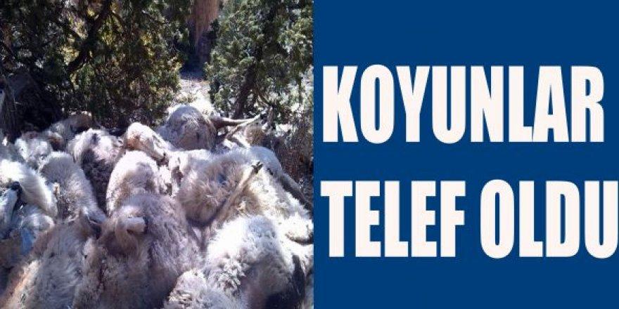 Tekman'da Virajı alamayan kamyonet yan yattı: 50 koyun telef oldu