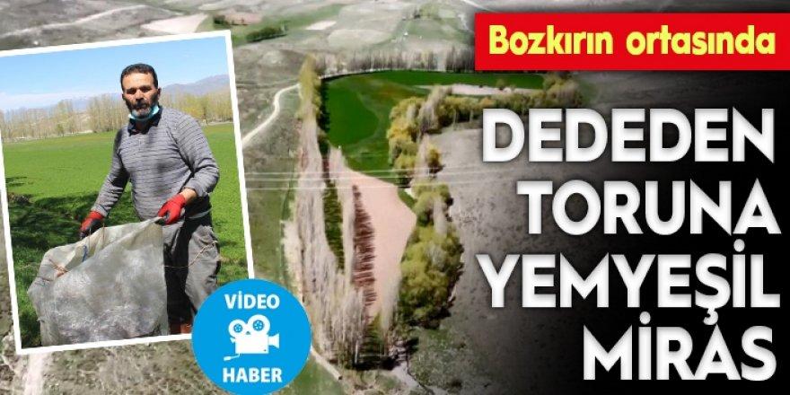 Erzurum'da dedesinden miras kaldı 'P' harfini andırıyor: TIR dolusu para verseler satmam