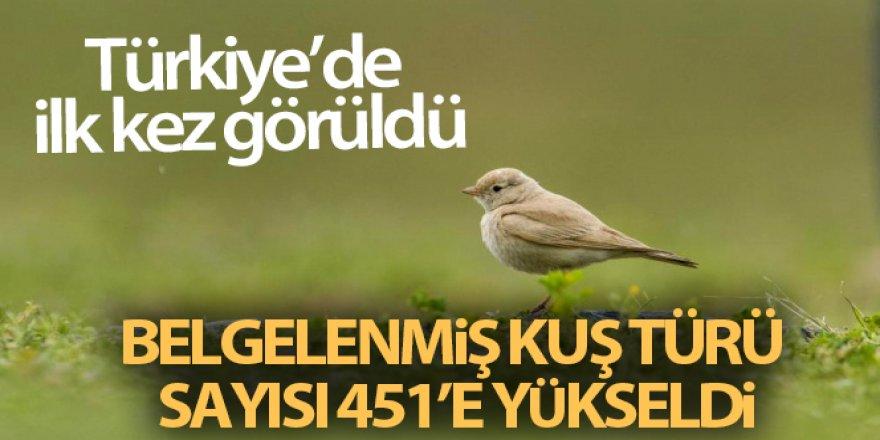 Türkiye'de ilk kez 'Küçük Çöl Toygarı' görüldü