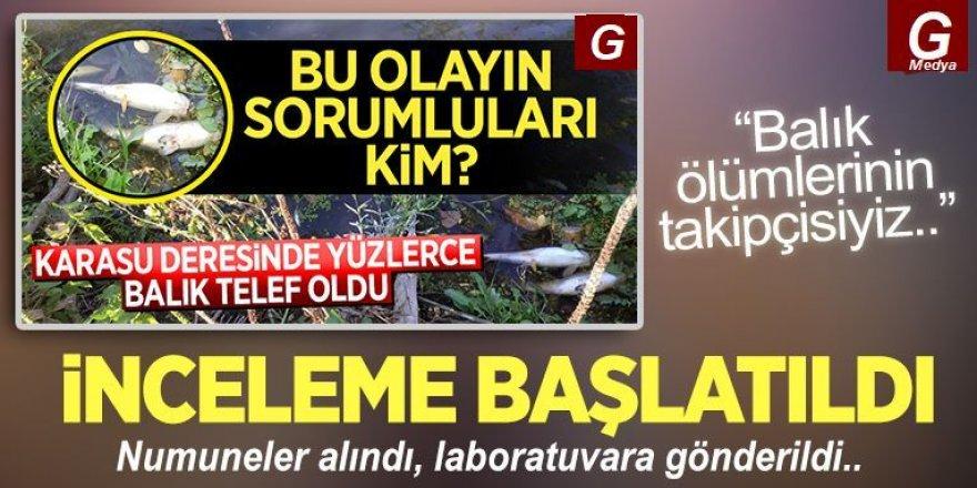 Erzurum'daki balık ölümleri için inceleme başlatıldı
