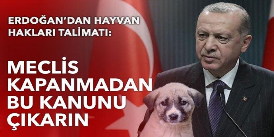 Cumhurbaşkanı Erdoğan'dan hayvan hakları talimatı