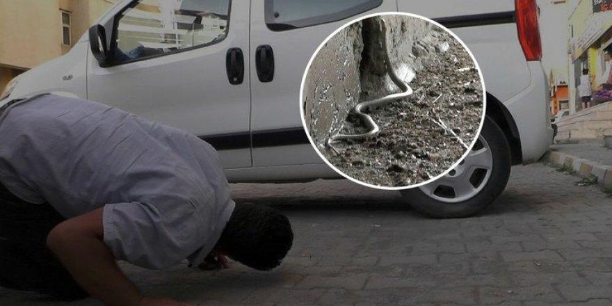 Erzurum'da arabaya giren yılan inat edince