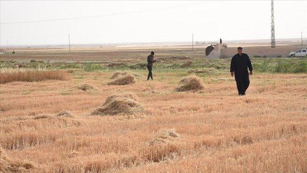 Hükümet harekete geçti! Kuraklığa karşı çiftçiyi koruma planı devrede