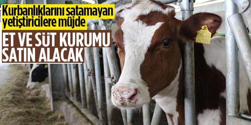 Satılamayan kurbanlıkları Et ve Süt Kurumu satın alacak