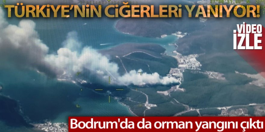 Bodrum'da da orman yangını çıktı
