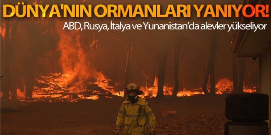 Dünya'nın ormanları yanıyor