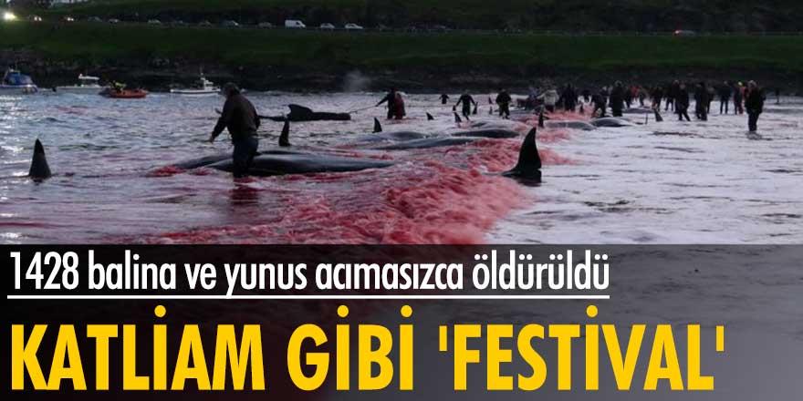 Faroe Adaları'nda festival adı altında katliam yapıldı!