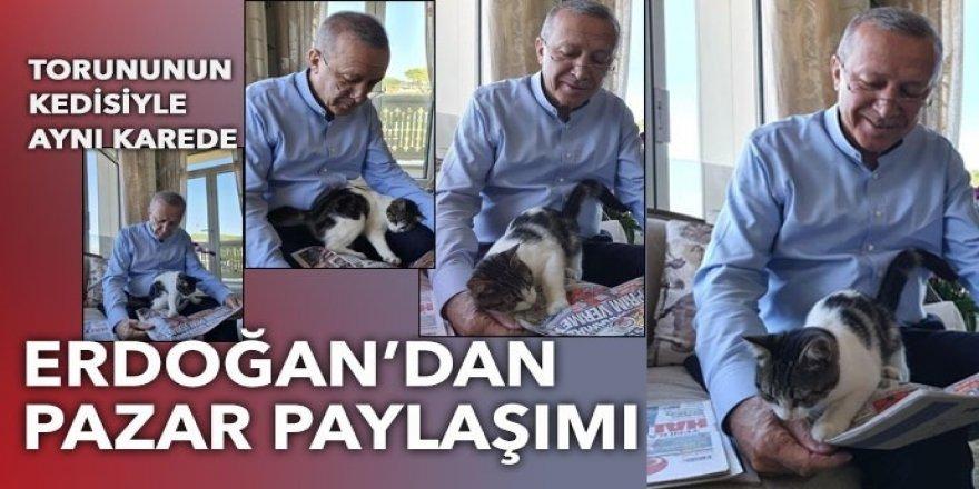 Erdoğan'ın torununun kedisiyle verdiği poz sosyal medyanın gündemine oturdu