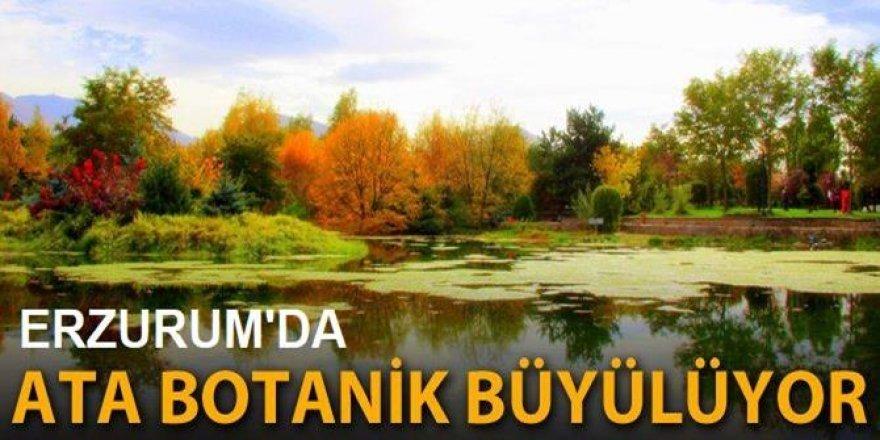 Ata Botanik Parkı'nda renk cümbüşü!