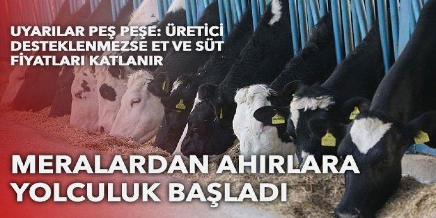 Süt ineği alarm veriyor