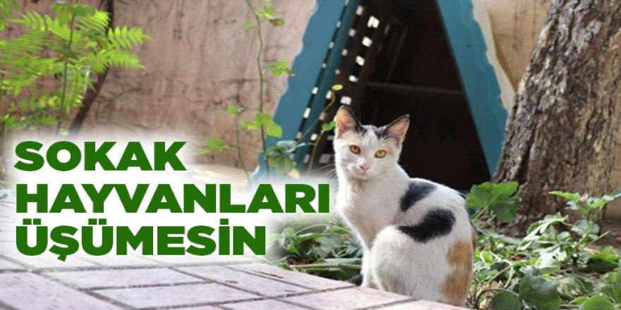 Erzurum'da Merkezde 650 köpek ve 115 kedi bulunuyor