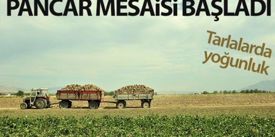 Hasat telaşı başladı: Hedef 550 bin ton pancardan 82 bin ton şeker üretimi