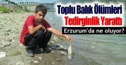 Erzurum'da toplu balık ölümleri!