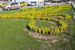 Büyükşehir 500 bin çiçek dikecekmiş!