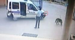 Karakol bahçesinde köpek vurdu