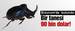 O böcekten Erzurum'da bulundu!