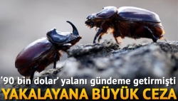 Gergedan böceği yakalayana para cezası!