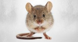 Fas'ta fare paniği: En az 80 yaralı!