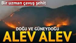 Tunceli ve Nusaybin'de orman yangınları!