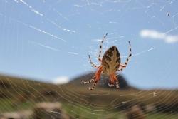 Dev örümcek görenleri şaşırttı
