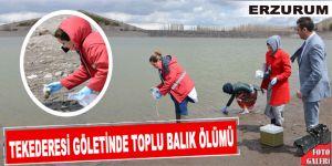 Tekederesi göletinde toplu balık ölümü