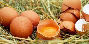 20 ton böcek ilaçlı yumurta piyasaya sürülmüş