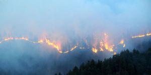 Sarıkamış Ormanı'ndaki Yangın söndürüldü