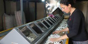 Diyarbakır'da terör bitti, ipek böcekçiliği üretimi şahlandı