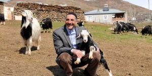 """Bingöllü çobana """"koyunlarla imtihanı"""" ün getirdi"""