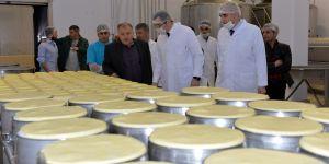 Erzurum'da Sütler toplanmaya başlandı