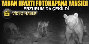 Erzurum'da böyle görüntülendiler