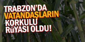 Trabzon'a vampir dadandı