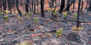 Avustralya'daki yangınlarda yeni gelişme
