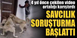 Erzurum'da köpek soruşturması
