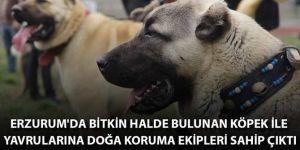Erzurum'da bitkin halde bulunan köpek ile yavrularına doğa koruma ekipleri sahip çıktı