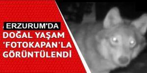 Erzurum'da yaban hayatı fotokapanlar ile izlenecek
