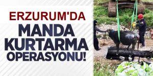 Erzurum'da Manda kurtarma operasyonu