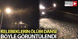 Erzurum'da kelebeklerin ölüm dansı geceyi beyaza bürüdü